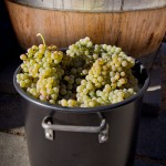 winemaking_05